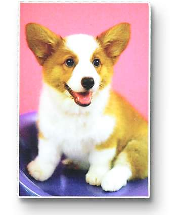 Dog Limited Cute Corgi Sticker